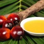 Як визначити пальмову олію в молочних продуктах