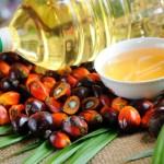 20.02.2019 Украина продолжает скупать пальмовое масло, больше всего - у Индонезии