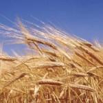 14.02.2019 Украина рекордно заработала на экспорте зерна