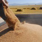 19.03.2019 В новом стандарте на пшеницу не учтено протравленное зерно