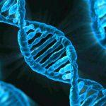 24.04.2019 Япония обеспечит поддержку инноваций по генному редактированию в селекции растений