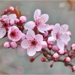 08.04.2019 Цены на абрикос и персик будут высокими – сады пострадали от заморозков