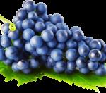 19.04.2019 Использование рефрактометров в виноделии