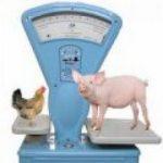 25.07.2019 Потребители переходят со свинины на курятину