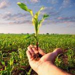 11.09.2019 Ученые призывают снизить использование фосфора в сельском хозяйстве