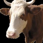 09.10.2019 Фермерам направлено 57,5 млн грн дотаций за животных