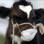 05.05.2020 Молочная отрасль VS коронавируса